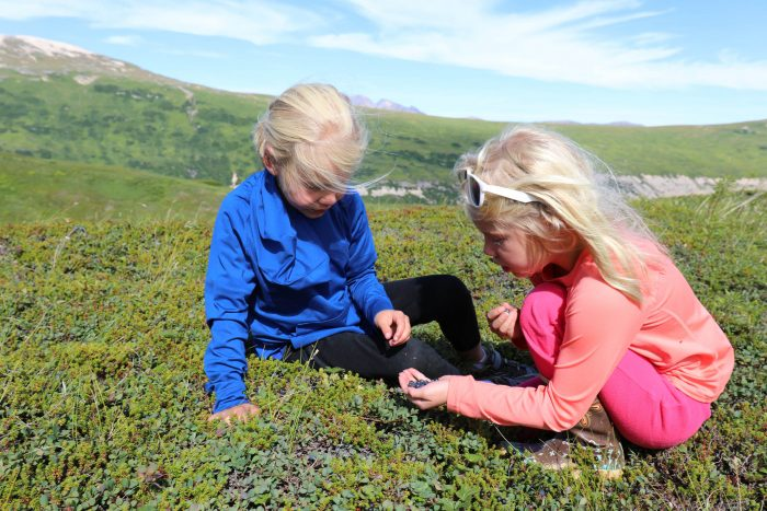 Two siblings pick blueberries on a mountainside during their Alaska family vacation.